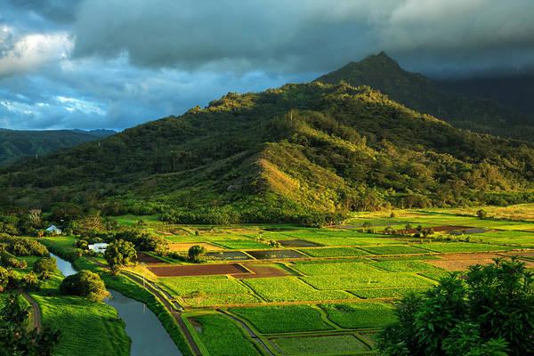 Photograph - Hanalei Valley Taro Fields by James Eddy