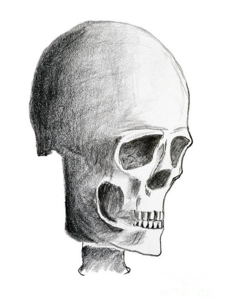 Wall Art - Drawing - Hand Drawing Of The Skull - Pencil On Paper by Michal Boubin