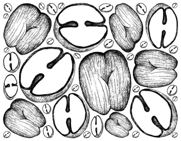 Coco Drawing - Hand Drawn Background Of Double Coconut Fruits by Iam Nee