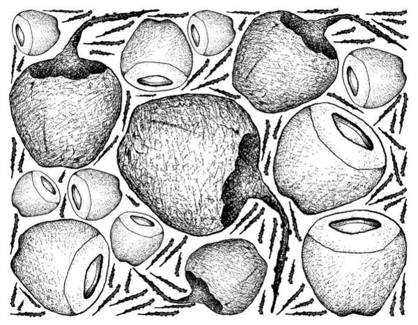 Coco Drawing - Hand Drawn Background Of Fresh Coconut Fruits by Iam Nee