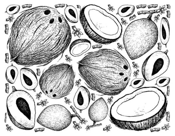 Coco Drawing - Hand Drawn Background Of Mamey Sapote And Coconut by Iam Nee