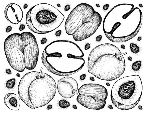 Coco Drawing - Hand Drawn Background Of Peach And Double Coconut Fruits by Iam Nee