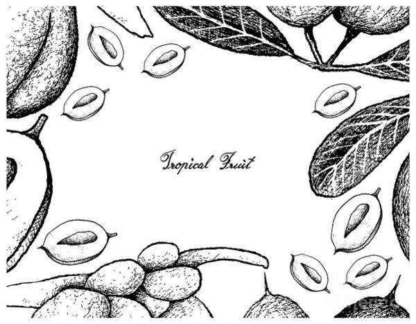 Coco Drawing - Hand Drawn Frame Of Karanda And Double Coconut Fruits by Iam Nee