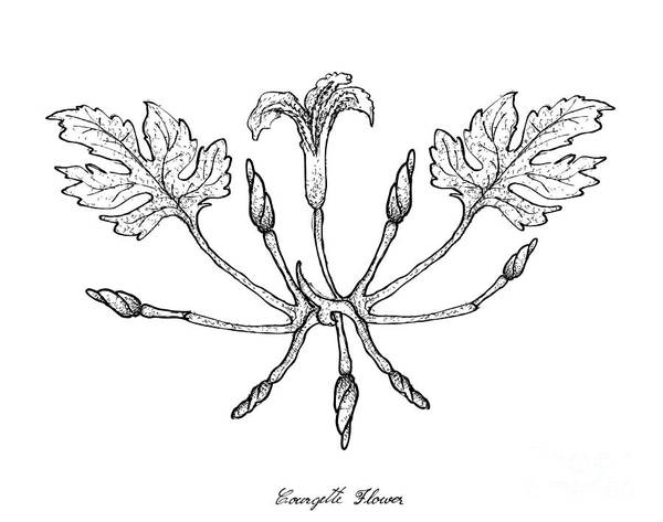 Organic Garden Drawing - Hand Drawn Of Courgette Flowers On White Background by Iam Nee
