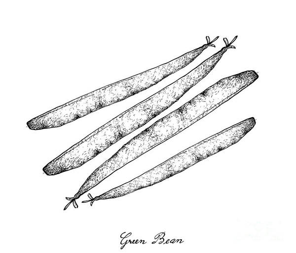 Organic Garden Drawing - Hand Drawn Of Delicious Fresh Green Beans by Iam Nee