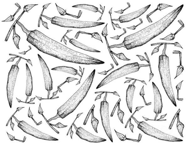 Organic Garden Drawing - Hand Drawn Of Fresh Okra Plants Background by Iam Nee