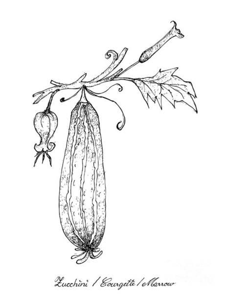 Organic Garden Drawing - Hand Drawn Of Fresh Zucchini Fruits With Flowers by Iam Nee