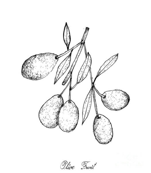 Olive Branch Drawing - Hand Drawn Of Green Olives On White Background by Iam Nee