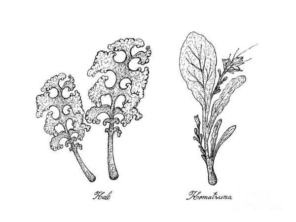 Hand Drawn Of Kale And Komatsuna Plants Art Print