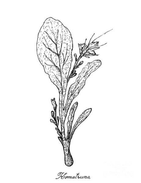 Hand Drawn Of Komatsuna Plants On White Background Art Print