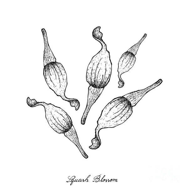 Organic Garden Drawing - Hand Drawn Of Squash Blossoms On White Background by Iam Nee