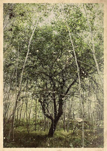 Photograph - Hand Of God Apple Tree Poster by Christina VanGinkel