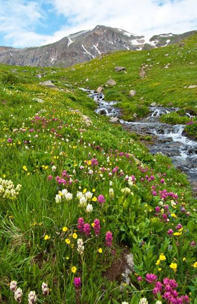 Photograph - Handie's Peak And Alpine Meadow by Cascade Colors