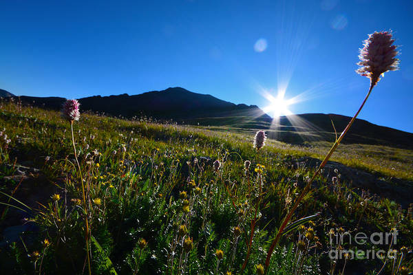 Art Print featuring the photograph Handies Peak Sunrise by Kate Avery