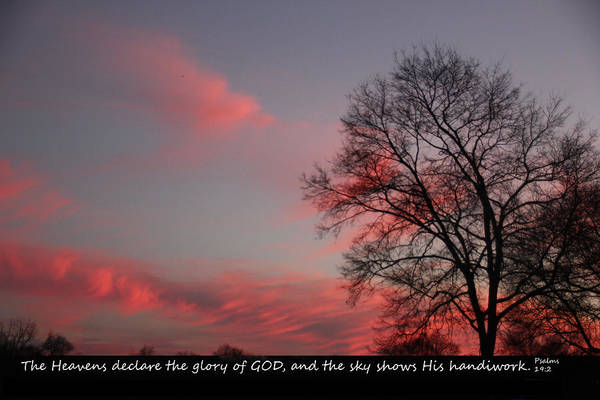 Photograph - Handiwork Of God by Ericamaxine Price