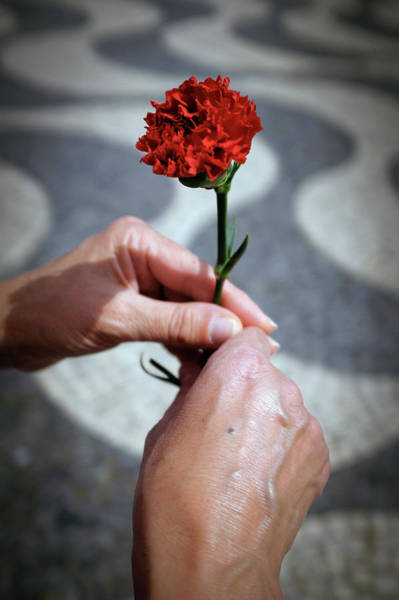 Carnation Photograph - Hands And Carnation by Carlos Caetano