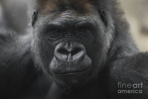 Photograph - Handsome Boy by Andrea Silies