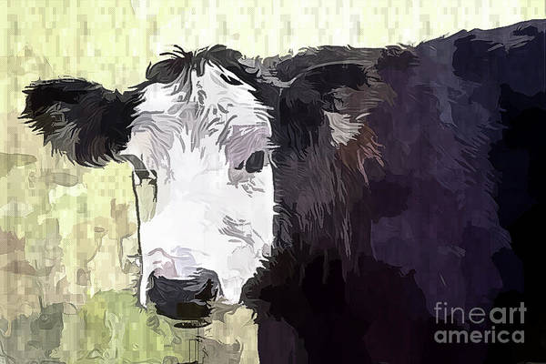 Photograph - Handsome Heifer by Eleanor Abramson