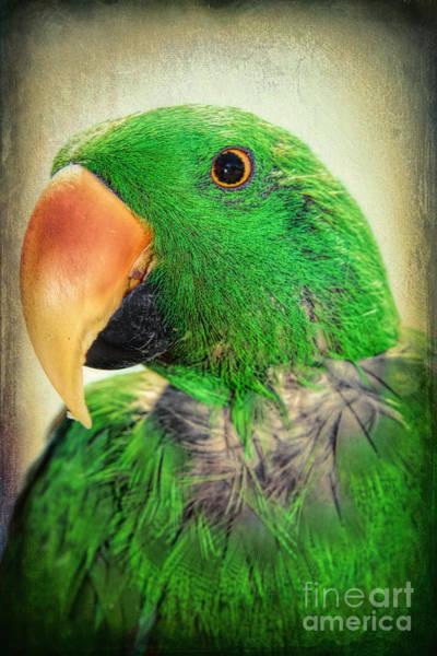 Eclectus Parrots Photograph - Handsome Parrot by Kasia Bitner