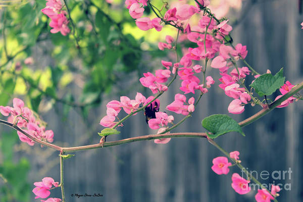Photograph - Hang On by Megan Dirsa-DuBois