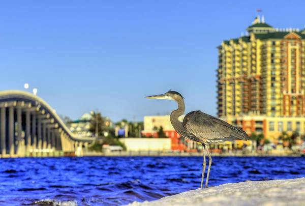 Destin Photograph - Hang With The Locals In Destin by JC Findley