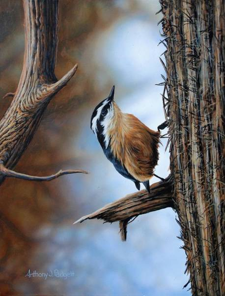 Painting - Hangin Out - Nuthatch by Anthony J Padgett