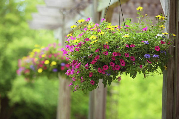 Photograph - Hanging Baskets by Sue Collura