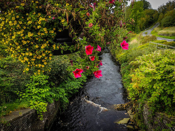 Photograph - Hanging Flowers Over The Owenslieve River In County Clare by James Truett