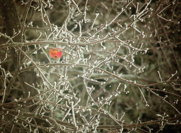 Photograph - Hanging On by Sue Collura