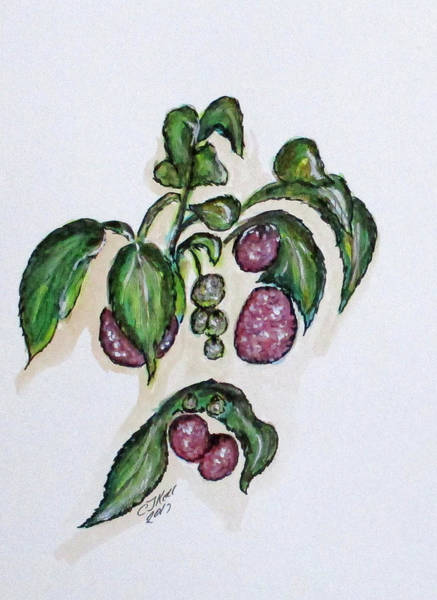 Painting - Hanging Raspberries by Clyde J Kell