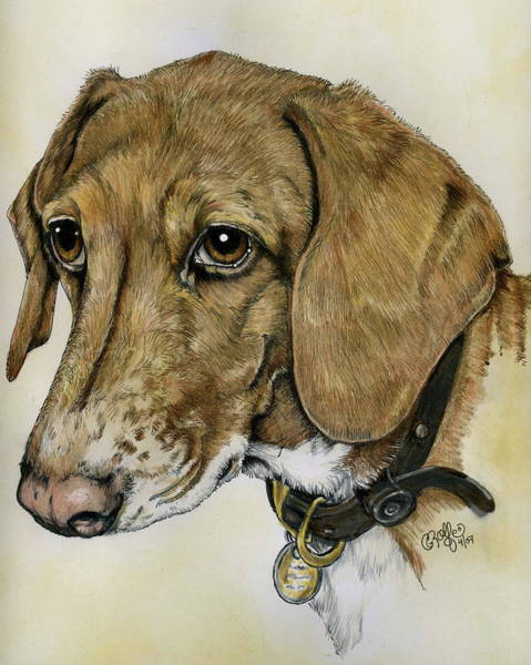 Mutt Drawing - Hank The Hound by Crystal Rolfe