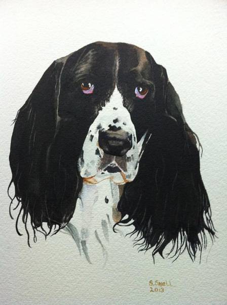 Field Spaniel Painting - Hannah by Stephanie Snell