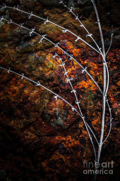 Photograph - Hannah's Garden Natures Form by Michael Arend