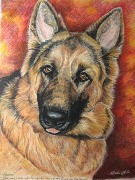 German Shepherd Drawing - Hansel by Linda Sala