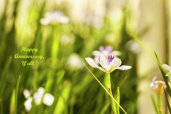 Photograph - Happy Anniversary African Iris by Kay Brewer