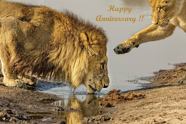 Photograph - Happy Anniversary Lions Card by Kay Brewer
