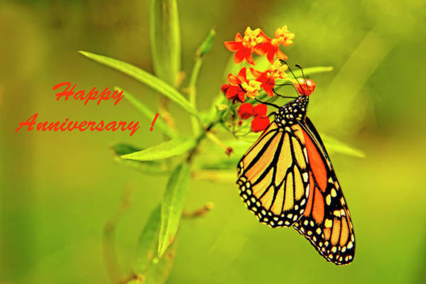 Photograph - Happy Anniversary Monarch Butterfly by Kay Brewer