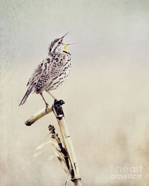 Photograph - Happy As A Lark by Pam  Holdsworth