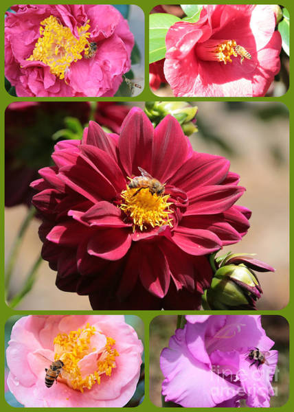 Photograph - Happy Bees And Flowers Collage by Carol Groenen