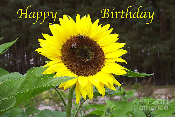 Photograph - Happy Birthday - Greeting Card - Sunflower by Sascha Meyer
