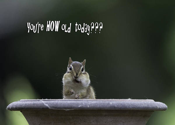 Chipmunk Wall Art - Photograph - Happy Birthday by Everet Regal