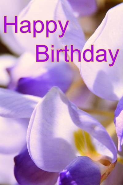 Photograph - Happy Birthday Wisteria by Lisa Wooten