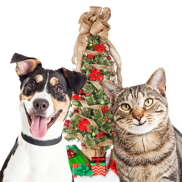 Bauble Wall Art - Photograph - Happy Cat And Dog With Christmas Tree by Susan Schmitz