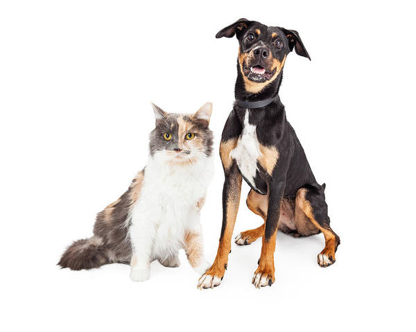 Wall Art - Photograph - Happy Crossbreed Dog And Pretty Calico Cat by Susan Schmitz
