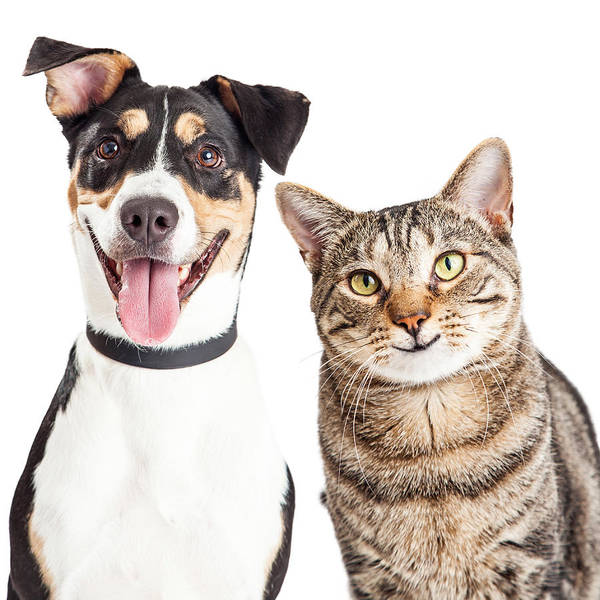Kitten Play Wall Art - Photograph - Happy Dog And Cat Together Closeup by Susan Schmitz