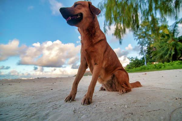 Photograph - Happy Dog  by Fabrizio Troiani