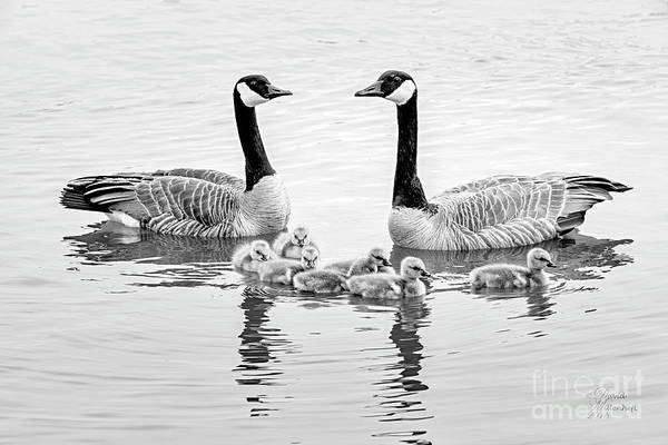 Photograph - Happy Family Black And White by David Millenheft