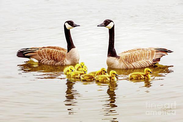 Photograph - Happy Family by David Millenheft