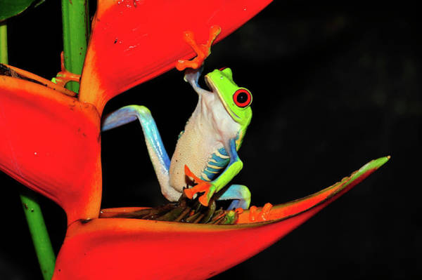 Photograph - Happy Frog by Harry Spitz