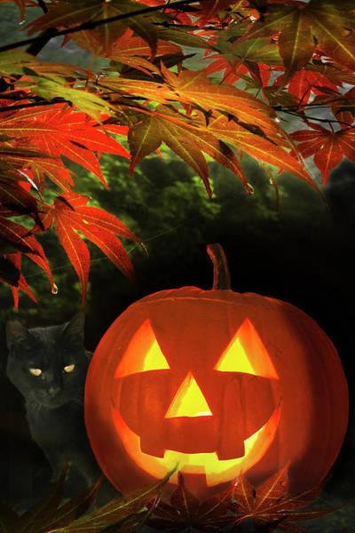 Photograph - Happy Halloween by Debra and Dave Vanderlaan